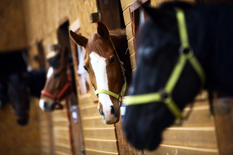Pierce County 4-H Horse News